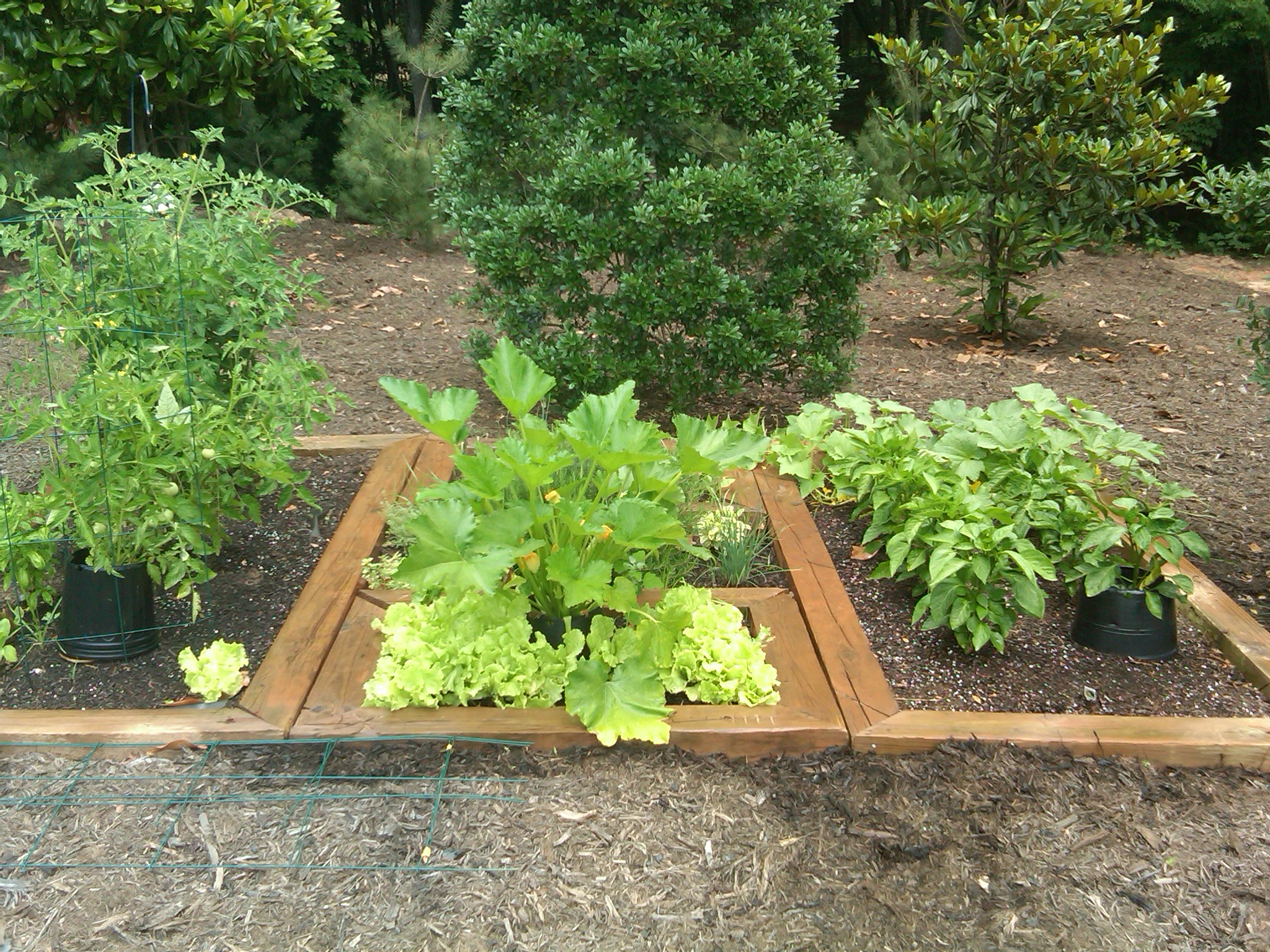 Simple Kitchen Herb Garden garden design: garden design with easytogrow herbs for a simple