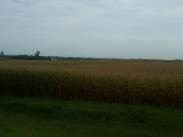 Corn-y Kansas