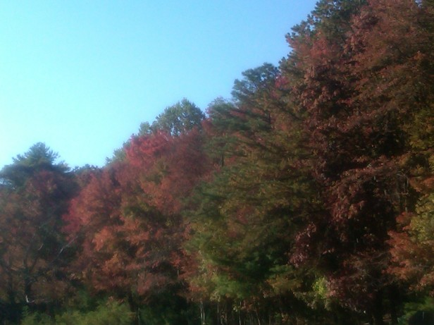 Colored Leaves Along the Blue Ridge Parkway
