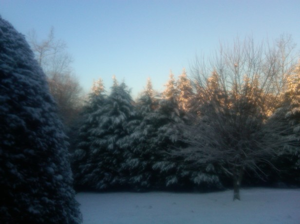 And drips like royal icing off feathery tips of the evergreens.