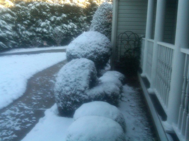 And turns shrubs into snowballs.  But it doesn't stick to the roads or walks.