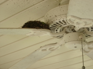 Bird's Nest on porch fan blade