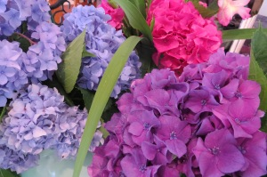 hydrangeas in different colors