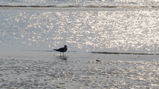 Hilton Head bird in glistening water