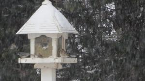 bird bevy at feeder