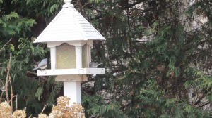Birds on feeder 1