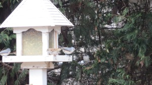 Birds on feeder 4