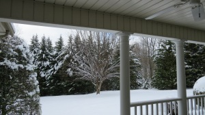 snow covered front yard