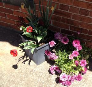 car show flowers