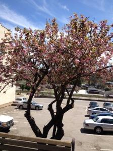 car show tree